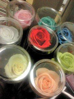 preserved roses.